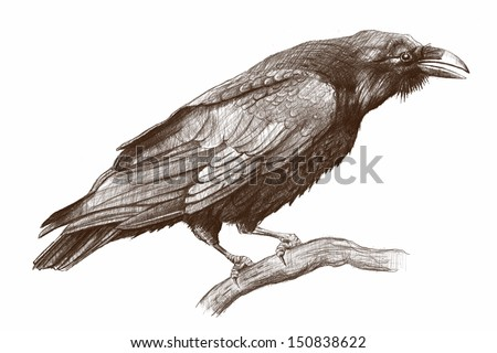 Raven pencil drawing/ Raven - stock photo
