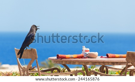 ravens on chairs - stock photo