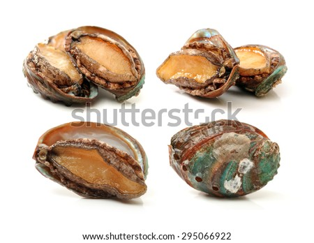 Raw abalones on the white background  - stock photo