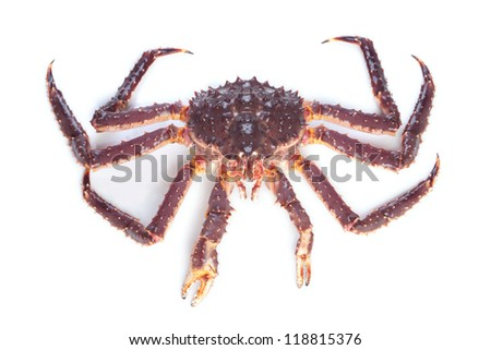 Raw (alive) kamchatka crab (Paralithodes camtschatica) isolated on white background