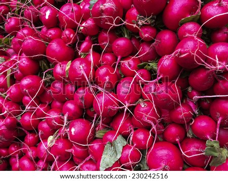 Raw beets from the gardenat farmers Market on Union Square New York - stock photo