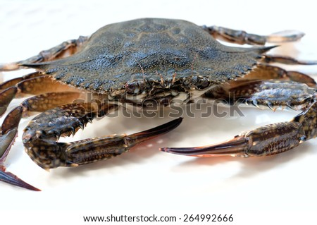 Raw blue crab before cooking, lying on a white plate, looking at camera. Over white background, main focus on the eye - stock photo