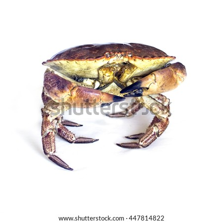 Raw crab isolated on a white. - stock photo