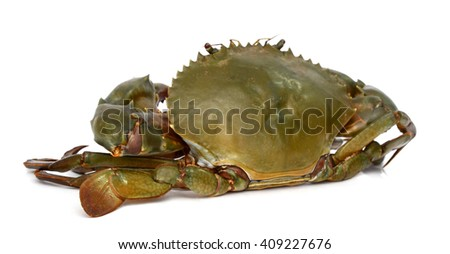 raw crab on white background
