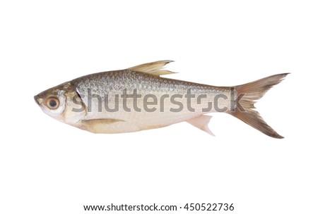 Raw fish isolated on white background - stock photo
