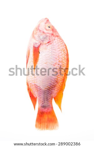 Raw fresh fish isolated on white background