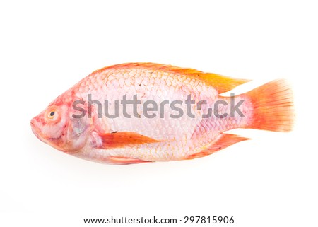 Raw fresh fish isolated on white background - stock photo