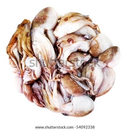 raw fresh octopus - calamari seafood isolated - stock photo