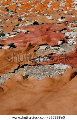 Raw freshly colored animal skins drying in the sun. Tannery in Fes (Fez), Morocco. - stock photo