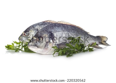 Raw gilt-head sea bream fishes garnished with parsley isolated on a white background