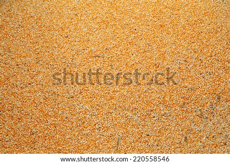 raw kernel corn beans texture and background - stock photo