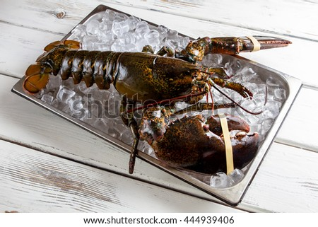 Raw lobster laying on ice. Lobster with tied claws. Seafood is the best delicacy. It's time to cook. - stock photo