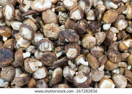 Raw mashrooms natural background at thailand market of samui island - stock photo