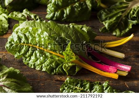 Raw Organic Rainbow Swiss Chard on a Background - stock photo