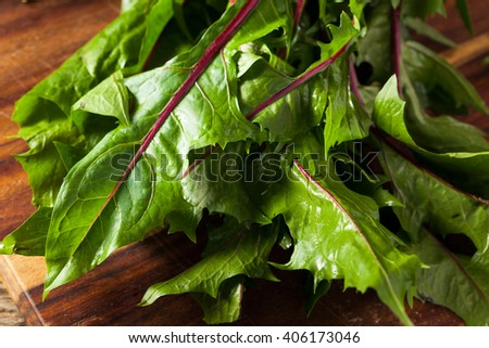 Raw Organic Red Dandelion Greens Ready to Chop - stock photo