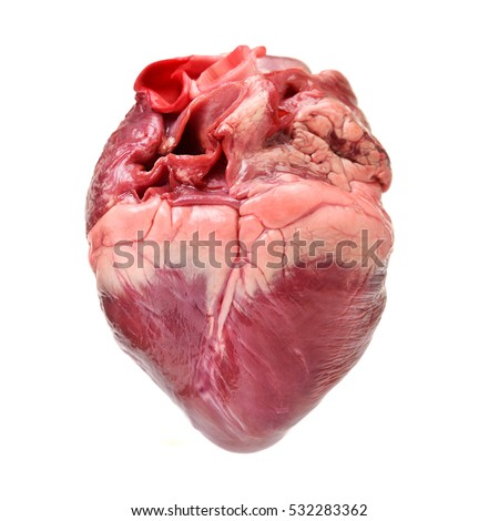 raw pig heart close-up isolated on white background