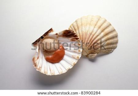 Raw scallop - stock photo