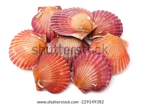 Raw scallop on white background - stock photo