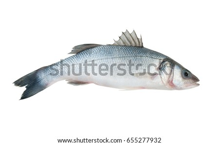 Raw seabass fish isolated on white background.