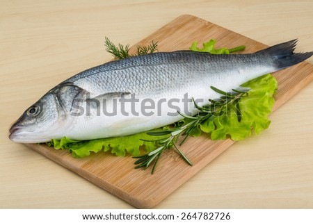 Raw seabass fish with rosemary and dill - stock photo