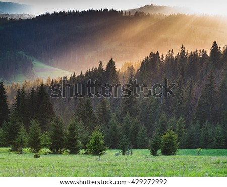 Ray of sunlight at sunset shining through the fog. The mountains. Forest. - stock photo