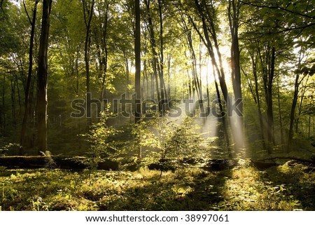 Ray of sunshine in the forest - stock photo