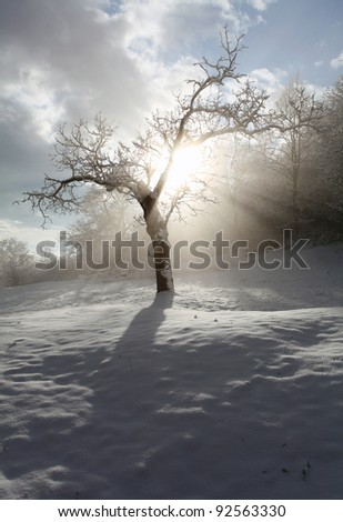 Rays and tree - stock photo