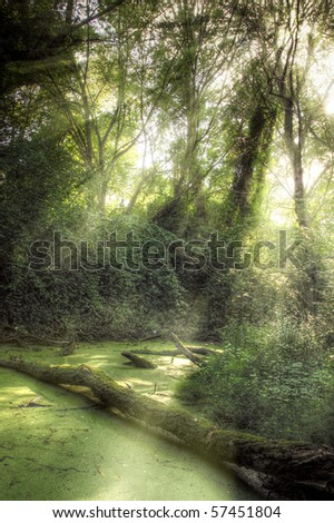 Rays of light falling through the mist and trees in the swamp