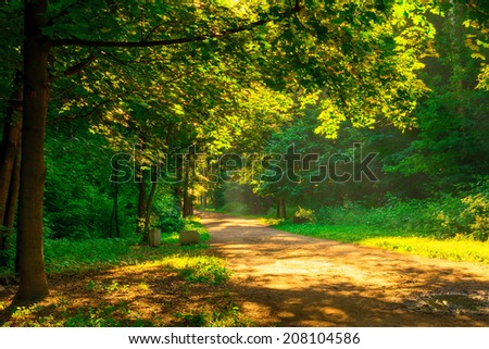 rays of the morning sun illuminate the park - stock photo