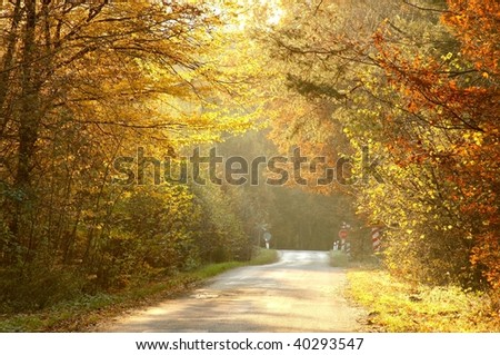 Rays of the setting sun falls on the country road leading through the autumn woods.