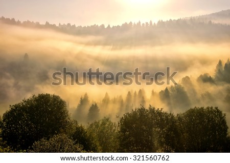 Rays of the sun and mist over the forest during wonderful autumn sunset - stock photo