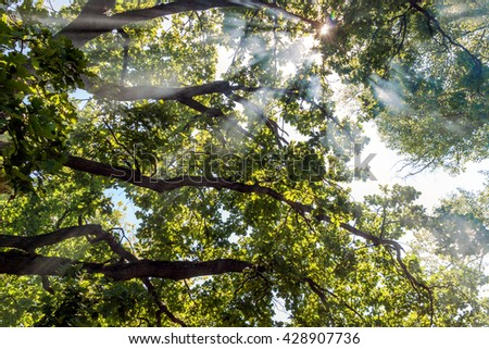 rays of the sun filtering through the leaves and the smoke from the fire - stock photo