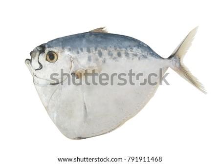 stock-photo-razor-moonfish-isolated-on-w