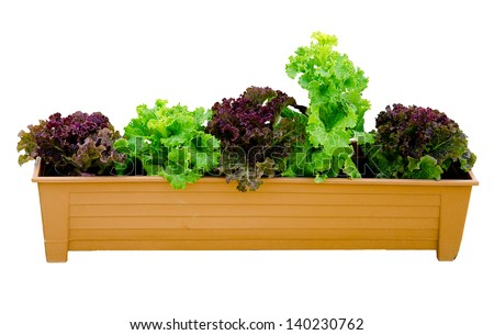 Rea oak and green oak on tray isolated on white background - stock photo