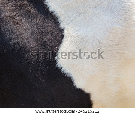 real black and white cowhide - stock photo