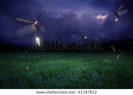 real fireflies at a calm night - stock photo