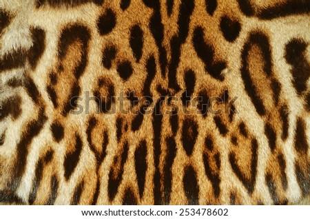 real fur of wildcat - stock photo