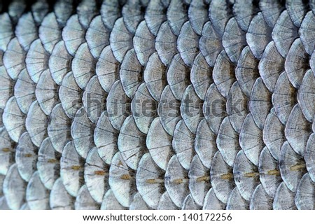 Real Roach Fish Scales Background - stock photo