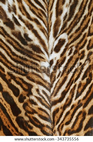 real skin of ocelot - stock photo