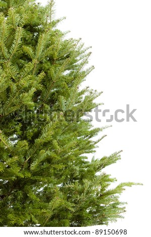 Real undecorated Christmas tree branches border isolated on white