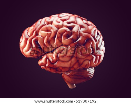 Real Brain Pictures | www.pixshark.com - Images Galleries ...