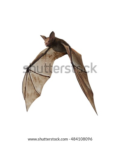 Realistic 3D render of brown bat flying on isolated white background.