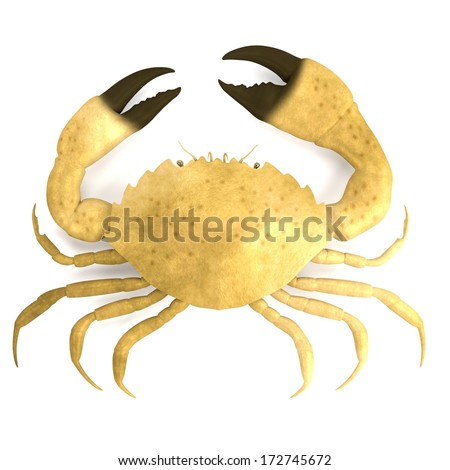 realistic 3d render of crustacean - menippe mercenaria - stock photo
