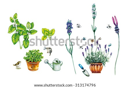 realistic illustration of melissa plant ( melissa officinalis) with branch and leaves and two wens and Lavender plant (lavandula angustifolia) with flowers and leaves and butterflies