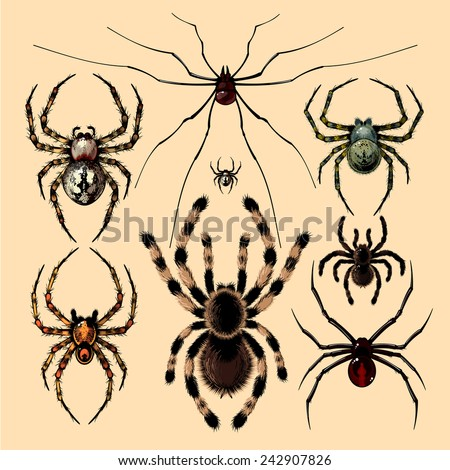 Realistic images of spiders - stock photo