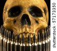 realistic-looking human skull model seen behind a row of rifle cartridges. - stock photo