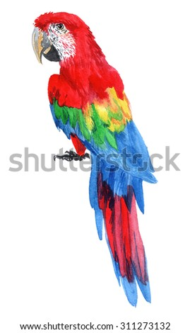 Realistic parrot Macaw. Watercolor illustration tropical birds isolated on a white background. - stock photo