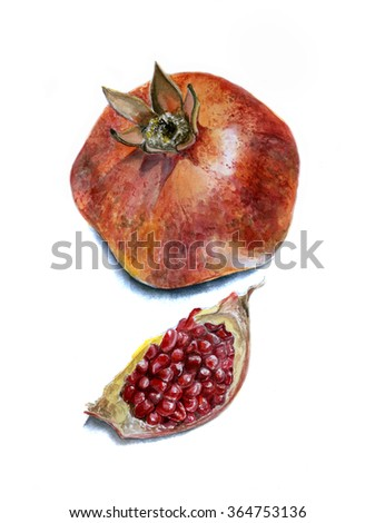 Realistic watercolor sketch of the pomegranate, separate the slice