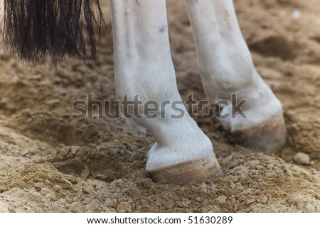 Rear Feet and tail of a horse in the sand - stock photo