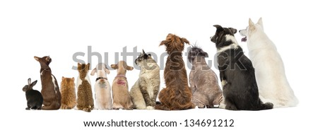 Rear view of a group of pets, Dogs, cats, rabbit, sitting, isolated on white - stock photo